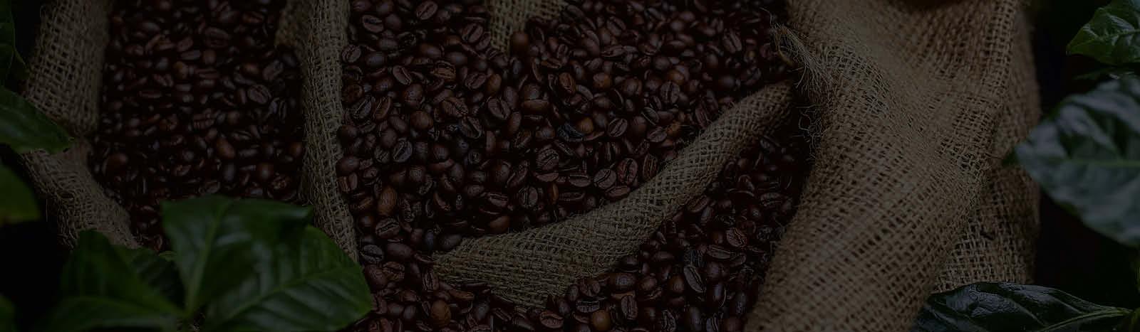 Café en Grains BIO